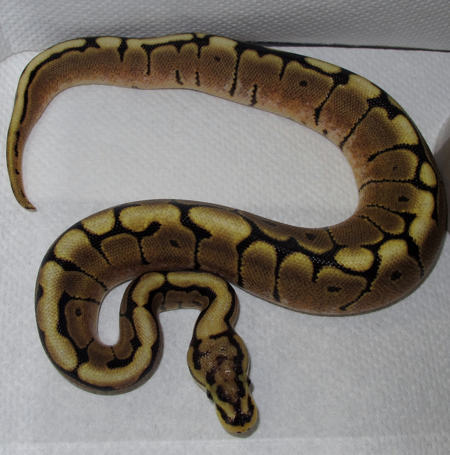 Twin Cities Reptiles Hours